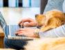 Sollten Arbeitnehmer frei bekommen, wenn das Haustier stirbt?