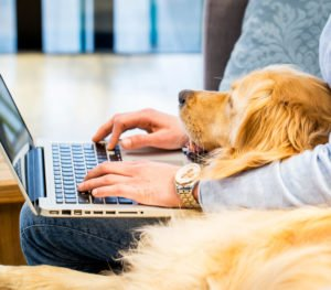 Hund Arbeit Job Haustier