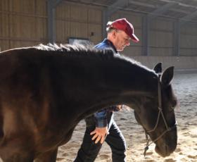 consinion GmbH setzt beim Coaching auf Pferde als Co-Trainer